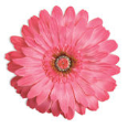 LL-LF-PK-22 Jeweled Flower Magnet: Pink