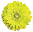 LL-LF-GR-20 Jeweled Flower Magnet: Lime Green